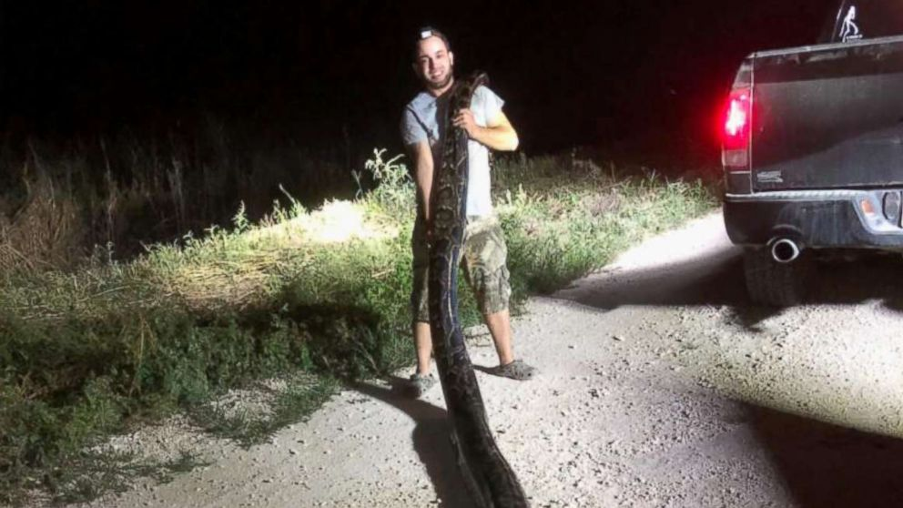 A 17.5 foot, 120 pound python was captured by a hunter in Miami-Dade County late into the night, Nov. 5, 2018.