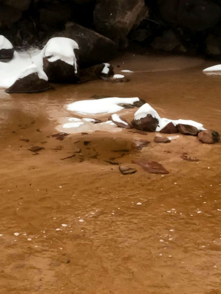PHOTO: The quicksand was disguised in a pool of mud on the Subway trail at Zion National Park.
