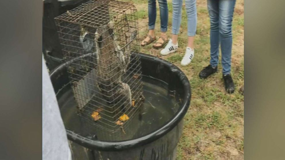 Students at Forest High School in Marion County, Fla., recorded video purporting to show raccoons being drowned in front of an agricultural science class.