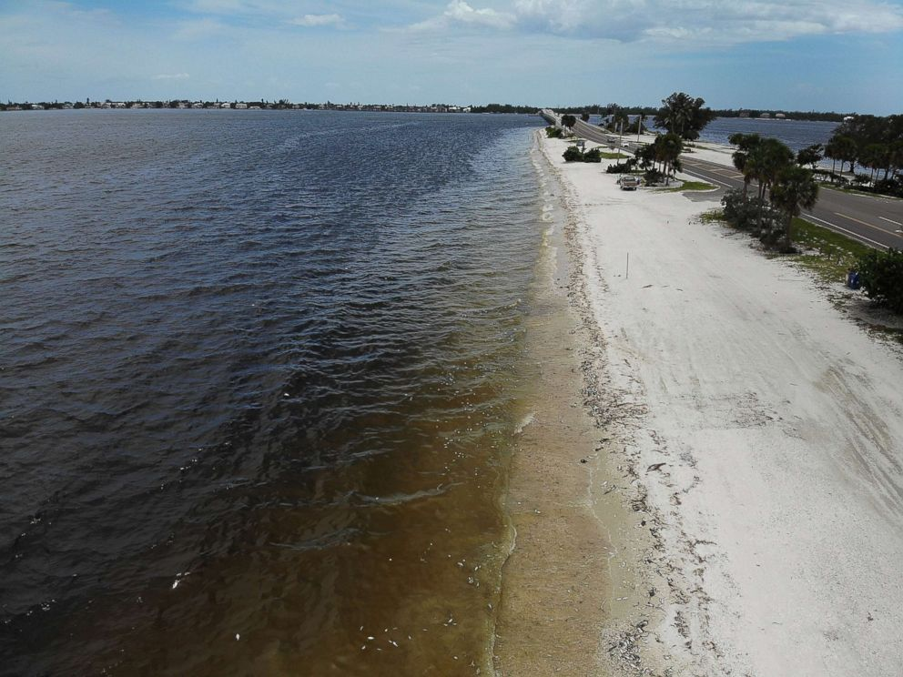 Florida Beaches Map.Toxic Red Tide Blooms Are Creeping Up Florida S West Coast Killing