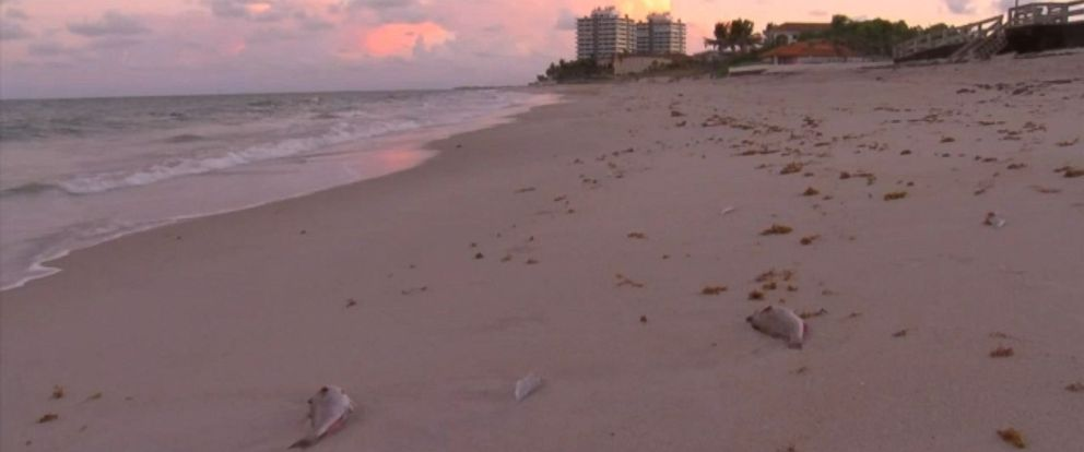 Photo Indian River County Beaches To Close Wednesday Oct 17 Due