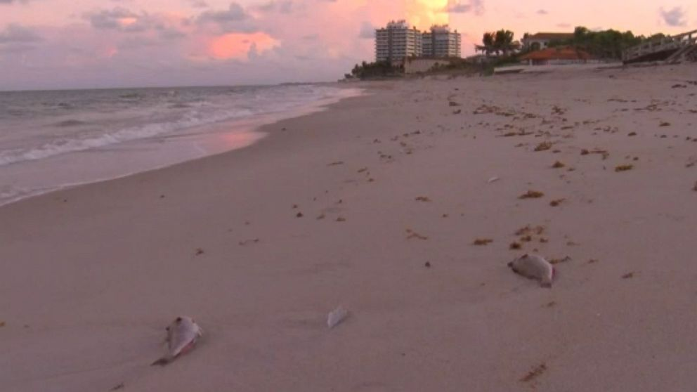 East Coast Closed After Red Tide