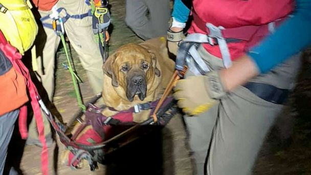 Mastiff had to be rescued from mountain after getting exhausted on hike, officials say