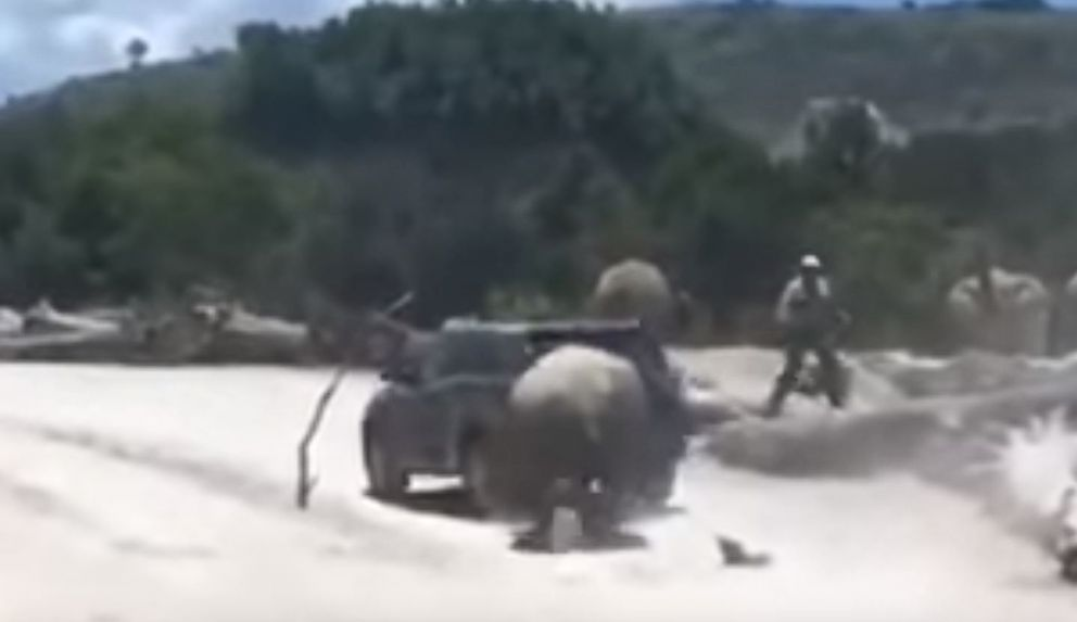 PHOTO: Video shows a male rhinoceros ramming a car at the Africam Safari park in Pueblo, Mexico.