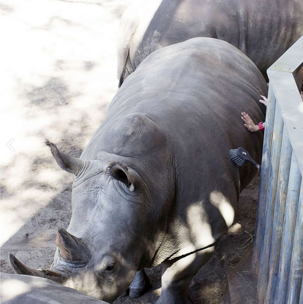 PHOTO: Guests participate in the Rhino Encounter at Brevard Zoo in Florida.