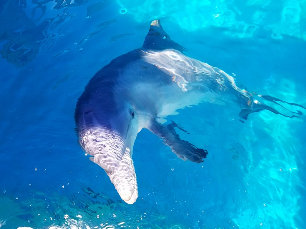 Veterinarians Perform First Ever Spinal Tap On Dolphin At