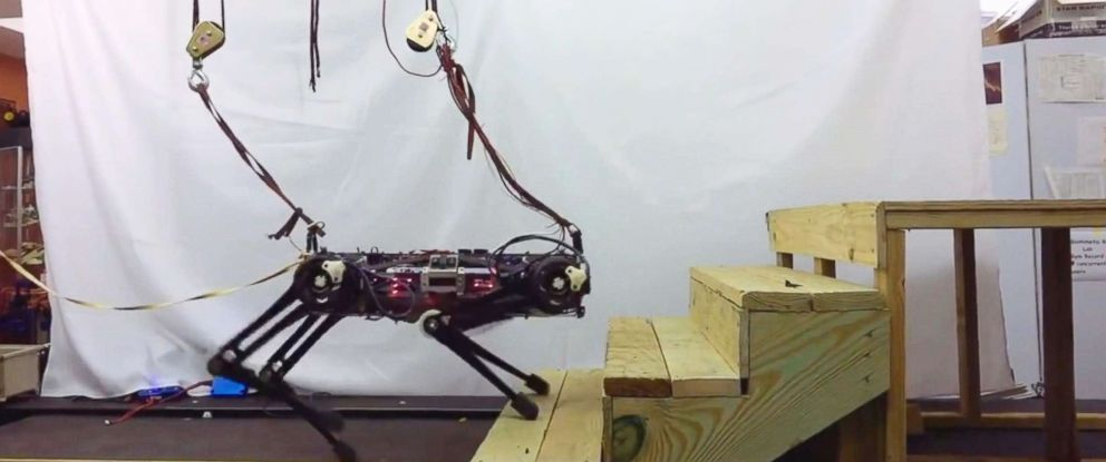 """PHOTO: """"Blind"""" Cheetah 3 robot, which is designed by MIT, can climb stairs, jumps, yanks, and shoves."""