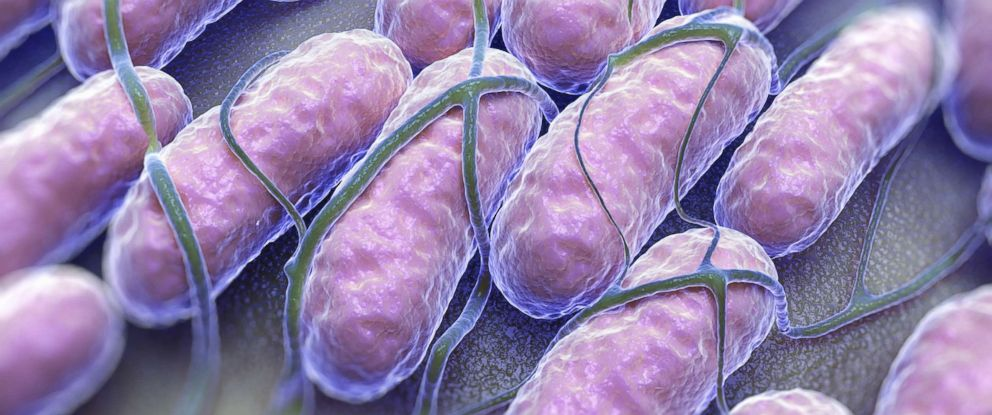 PHOTO: A culture of Salmonella bacteria is pictured in this undated stock photo.