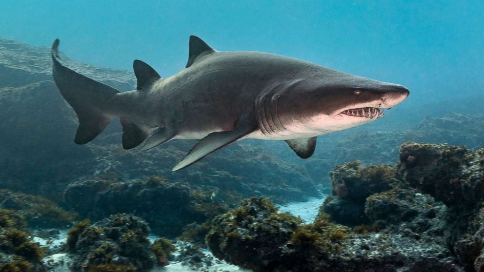 Shark Attacks What Are The Most Dangerous Places In America