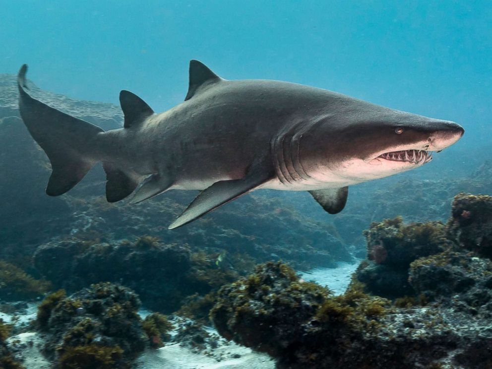 Shark attacks: What are the most dangerous places in America