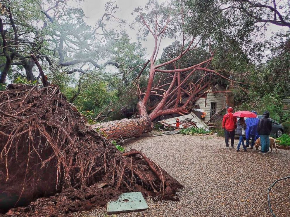 PHOTO: In this Saturday, Feb. 2, 2019, photo released by Santa Barbara County Fire, a large stone pine tree believed to be 100 years old came down into this Santa Barbara, Calif., home during Saturdays powerful winter storm.