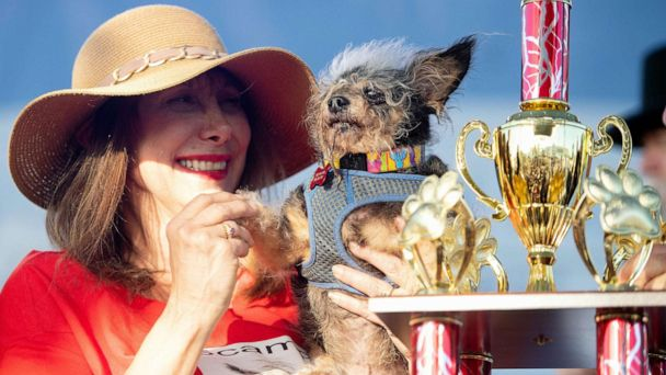 World's Ugliest Dog competition won by Scamp the Tramp