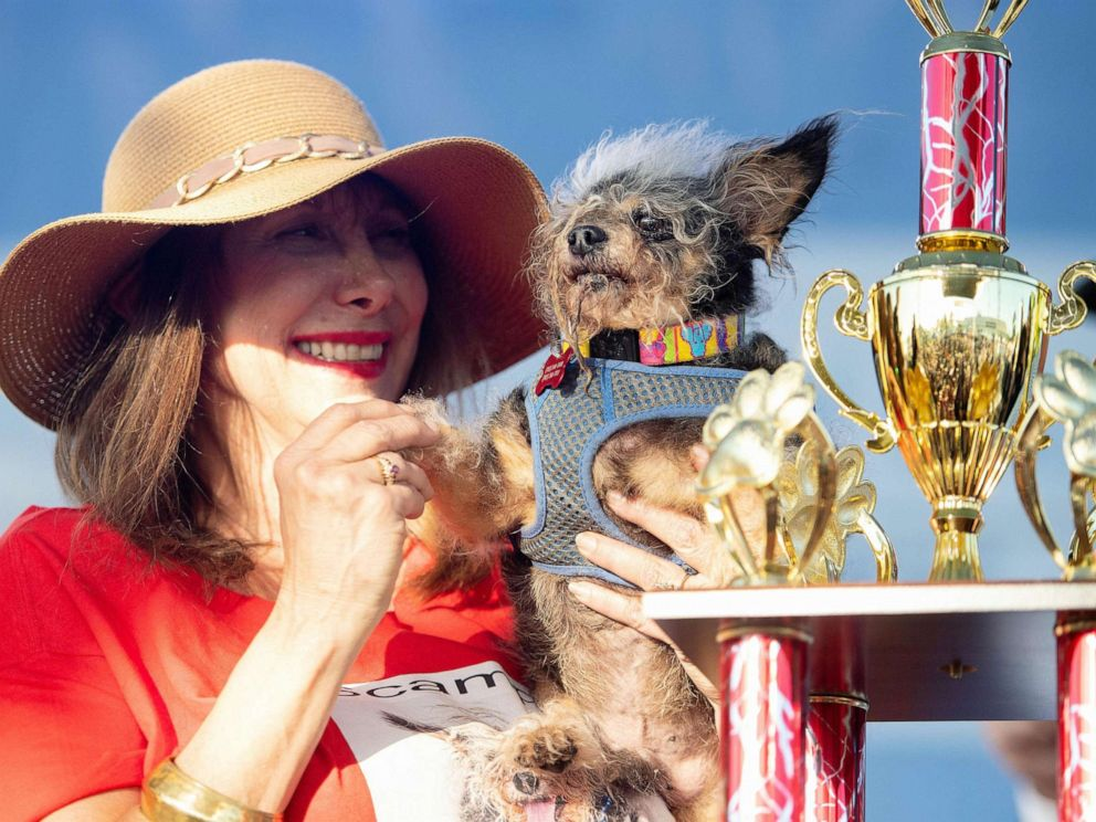 PHOTO: Darlene Wright holds up Scamp the Tramp as it is announced that he won first prize in the Worlds Ugliest Dog Competition in Petaluma, Calif., June 21, 2019.