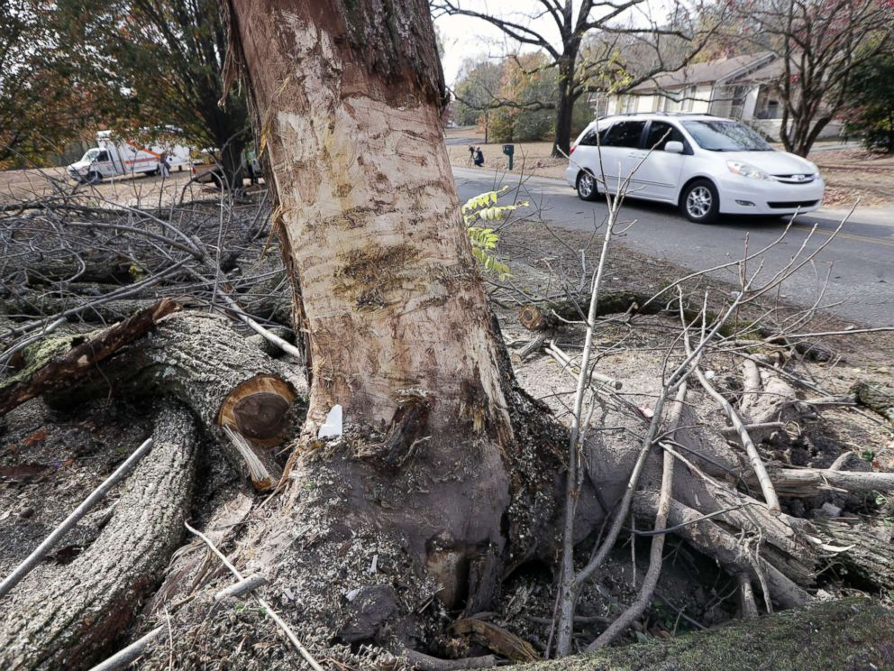 PHOTO: Traffic passes a tree that was hit by a school bus in Chattanooga, Tenn., Nov. 22, 2016. The bark of the tree was stripped off during the crash.