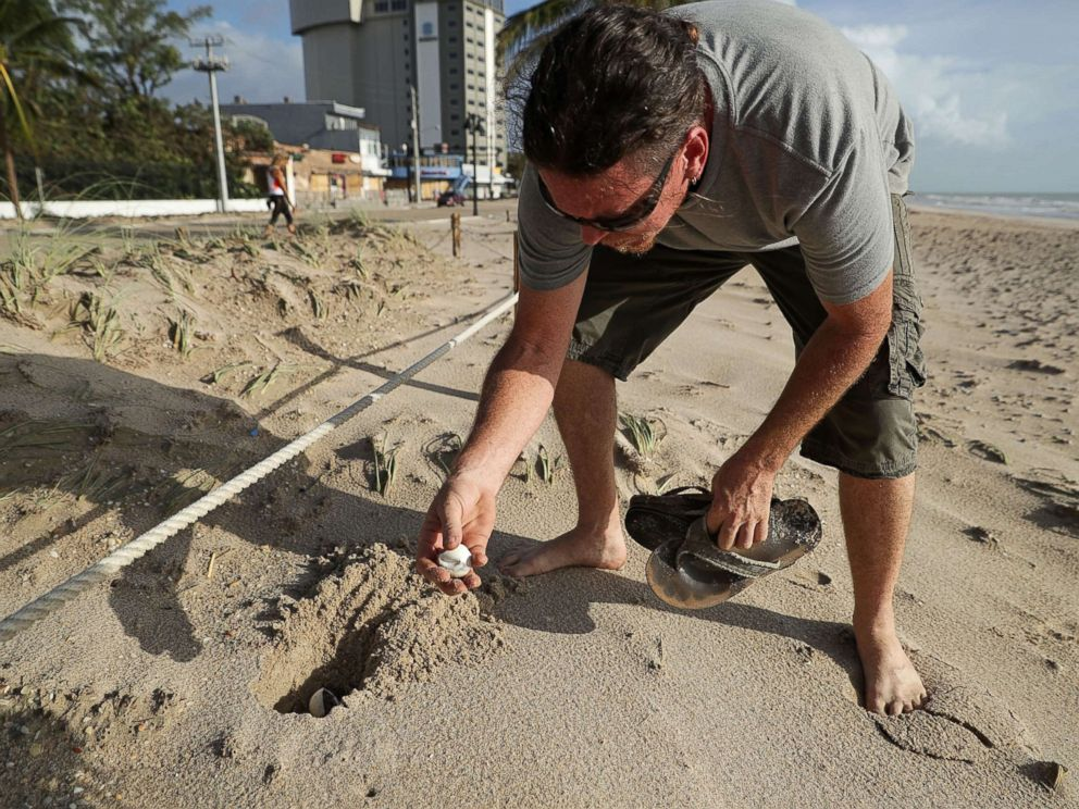 PHOTO: Sea Turtle Oversight Protection co-founder Richard WhiteCloud works to recover and re-bury sea turtle eggs that were destroyed during Hurricane Irma along Fort Lauderdale Beach, Sept. 11, 2017, in Fort Lauderdale, Fla.