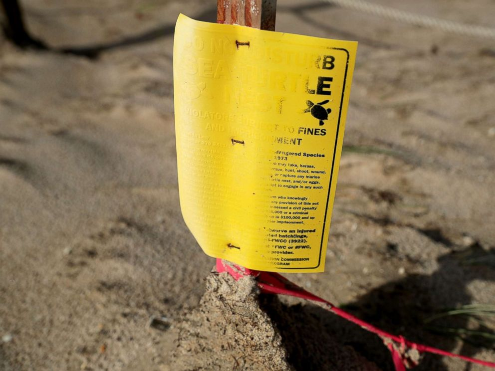 PHOTO: A sand-blasted sign marking the location of a sea turtle nest still sands one day after Hurricane Irma slammed into the state, Sept. 11, 2017, in Fort Lauderdale, Fla.