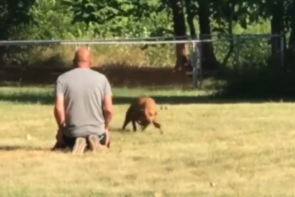 PHOTO: Wrigley, a Rhodesian Ridgeback mix service dpg, is pictured in an image from video reuniting with his owners, Tim and Lanasu Whitner, on July 18, 2018. Video of the event was shared by the Indianapolis Metropolitan Police Department.
