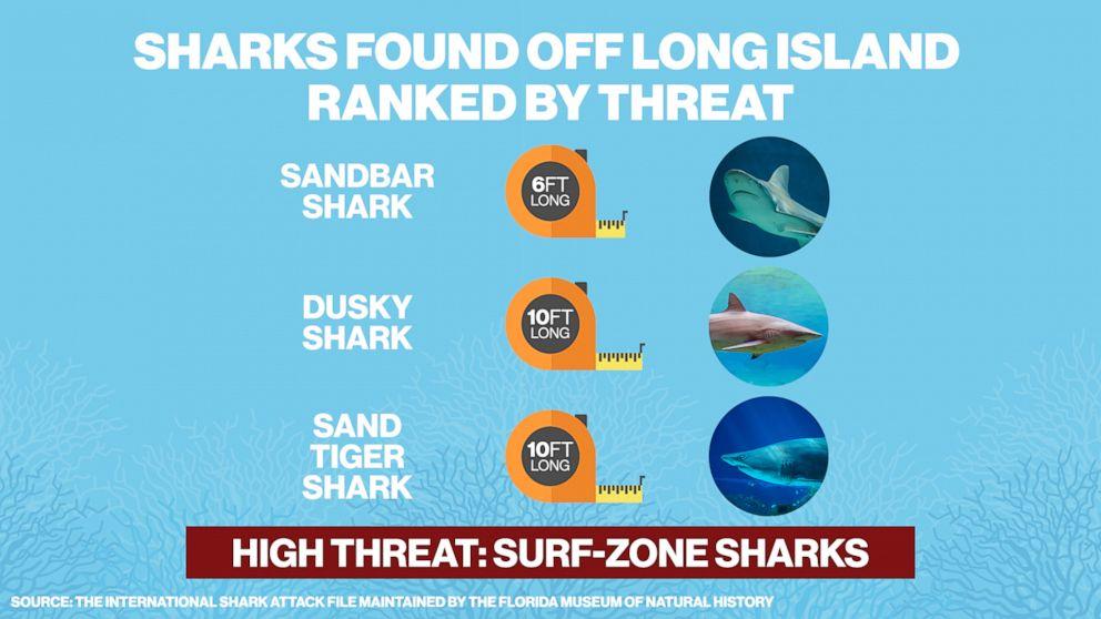 PHOTO: The sandbar shark, dusky shark and sand tiger shark are high threat surf-zone sharks found off of Long Island, N.Y.