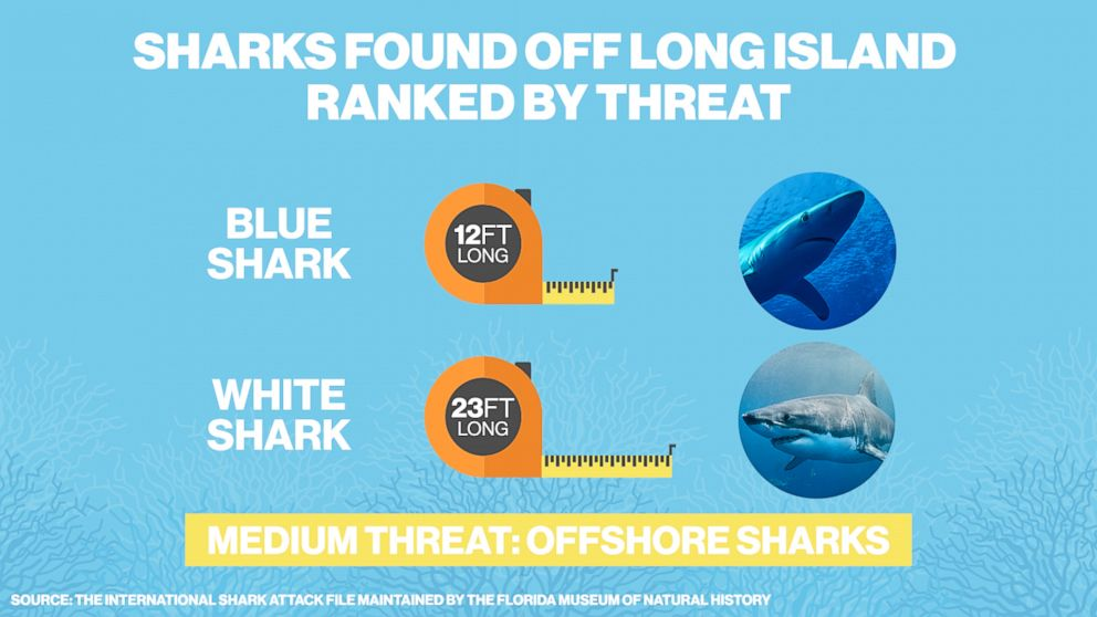 PHOTO: The blue shark and white shark are medium threat sharks found in the waters off of Long Island, N.Y.