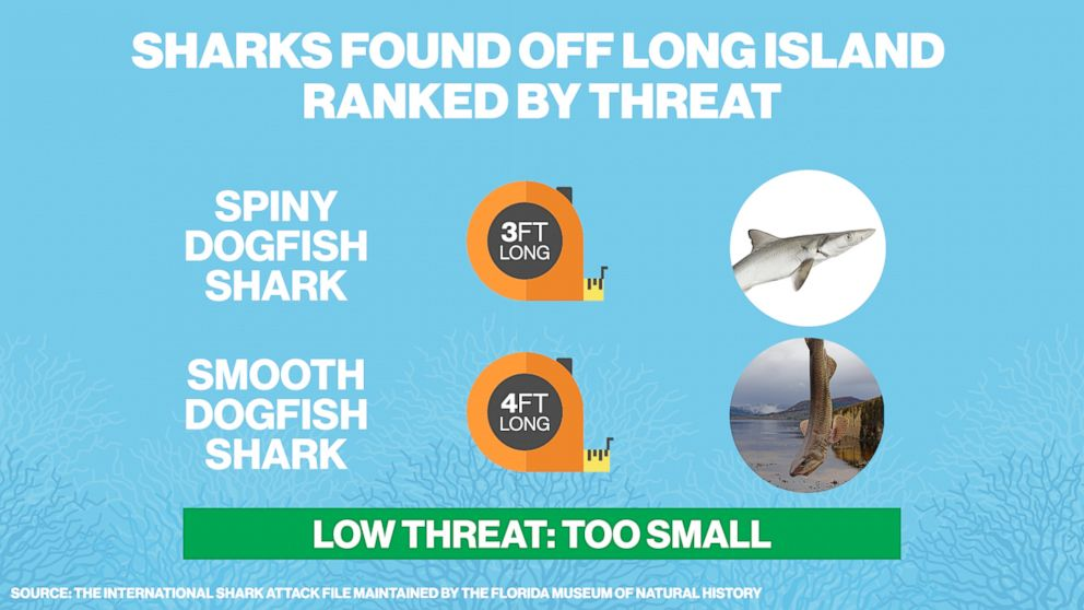 PHOTO: Spiny dogfish sharks and smooth dogfish sharks found in the water off of Long Island, N.Y. are considered too small to be a serious threat.