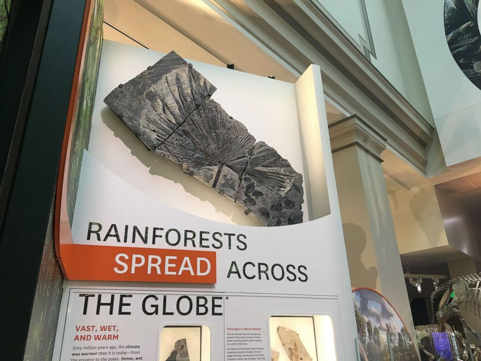 PHOTO: This undated photo shown an exhibition at the Smithsonian National Museum Of Natural History about rain forests.