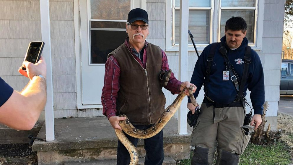 6-foot boa constrictor found inside man's couch