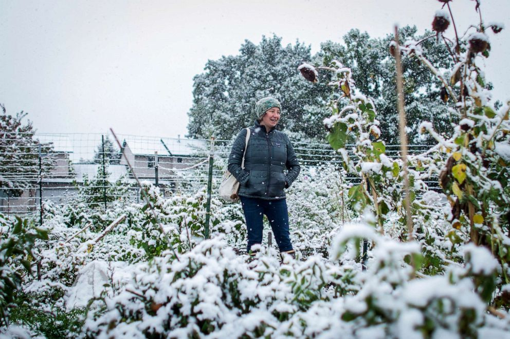 PHOTO: Brihannala Morgan looks over her five-row plot after harvesting the last of what she could from the plants in snow that hit Missoula, Mont., Sept. 29, 2019.