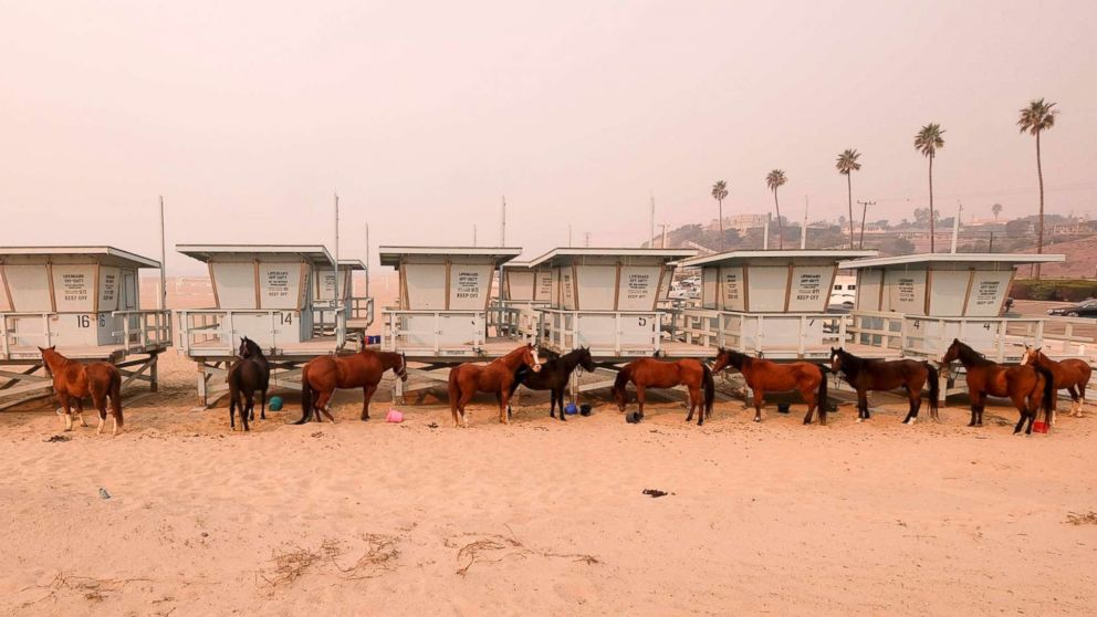Horses are tied to lifeguard booths on the beach in Malibu, Calif., Nov. 10, 2018. Wildfires are burning in both Southern and Northern California.