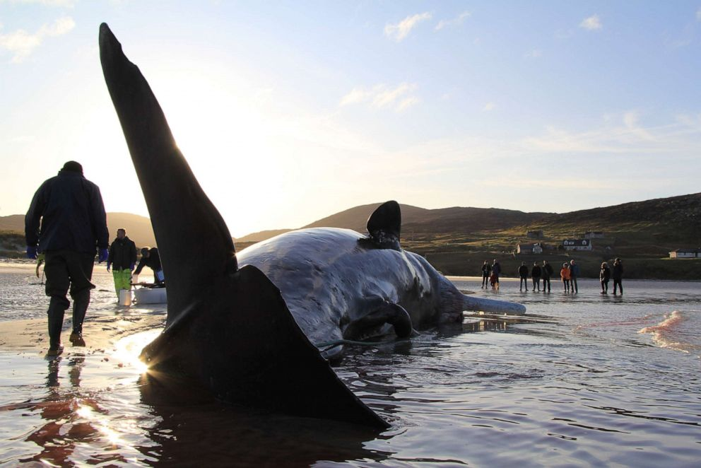 Sperm whale mortality florida gulf coast