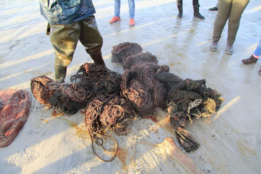 PHOTO: A sperm whale that died on a beach on the Isle of Harris in Scotland on Nov. 28, 2019, was found to have approximately 220 pounds of litter and marine debris in its stomach, according to the Scottish Marine Animal Strandings Scheme.