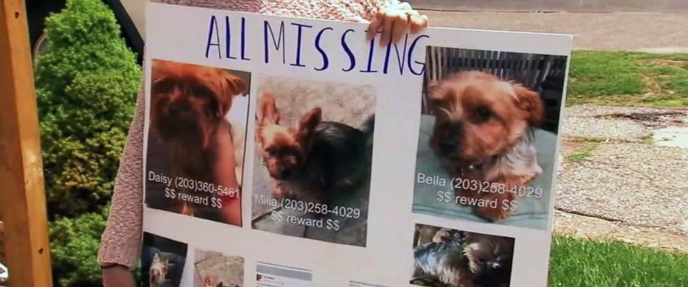 PHOTO: Officials in Bridgeport, Conn., believe an illegal breeder is stalking the owners of purebred Yorkshire terriers after 11 pups were stolen in the past two weeks.