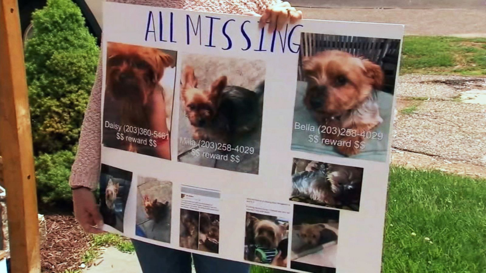 Dognapping Spree Targeting Purebred Yorkies Has Connecticut Towns