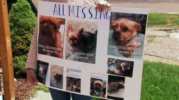 Dognapping spree targeting purebred Yorkies has Connecticut town's pet owners on edge