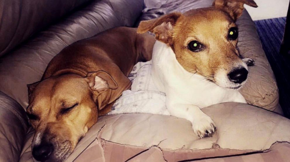 PHOTO: Sugar Mama now has a sister, a 13-year-old Jack Russel terrier named Emma.