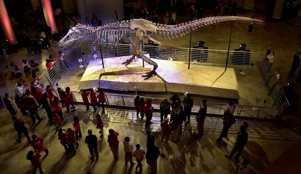 PHOTO: This May 17, 2000 file photo shows Sue, the largest and most complete Tyrannosaurus rex skeleton ever found, on public display at the Field Museum of Natural History in Chicago. company.
