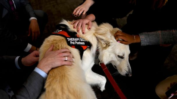 Therapy dogs sighted on Capitol Hill amid stress of first public impeachment hearing