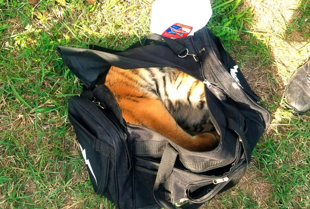 PHOTO: A male tiger is pictured in a duffle bag that was seized at the border near Brownsville, Texas, April 30, 2018.