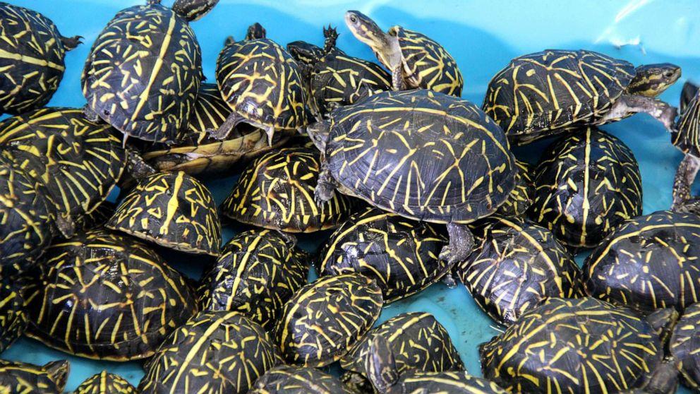 turtle 1 ht er 191020 hpMain 16x9 992