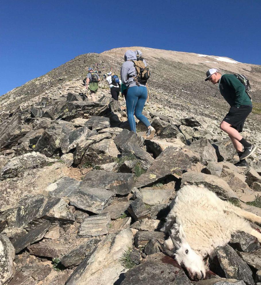 Mountain Goats Shot At Close Range On Colorado Hiking