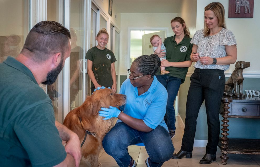 PHOTO: A Veterinary Medical Officer with the USDA inspects a 4-year-old Golden retriever at Farmsteads Puppy Paradise in Southern Maryland, June 18, 2018.