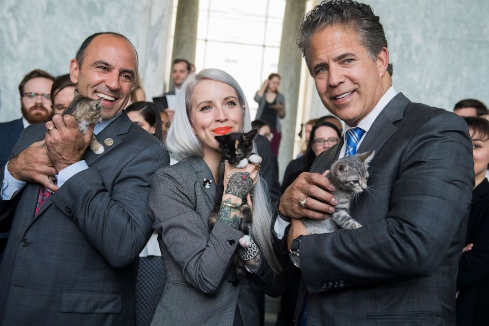 PHOTO: Reps. Jimmy Panetta, Mike Bishop and Hannah Shaw, an animal advocate known as Kitten Lady, pose during a event to promote bipartisan legislation to end the Department of Agricultures scientific testing on kittens, in Washington, June 7, 2018.