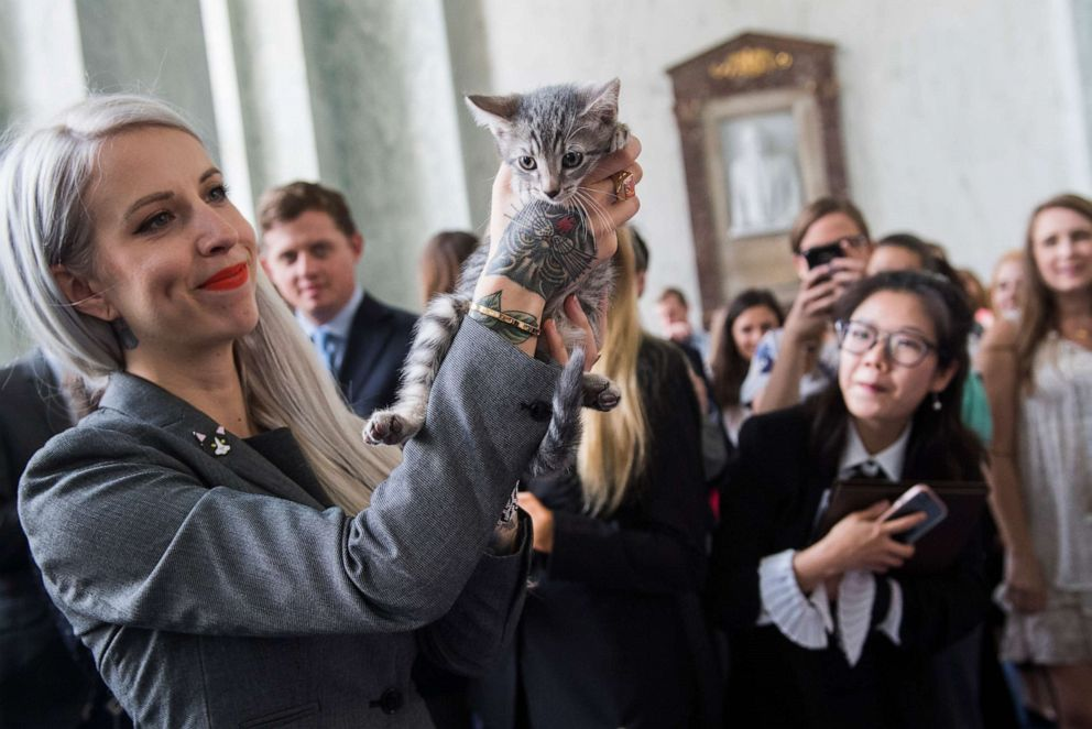 PHOTO: Hannah Shaw, an animal advocate known as Kitten Lady, attends an event to promote bipartisan legislation to end the Department of Agricultures scientific testing on kittens, in Washington, June 7, 2018.
