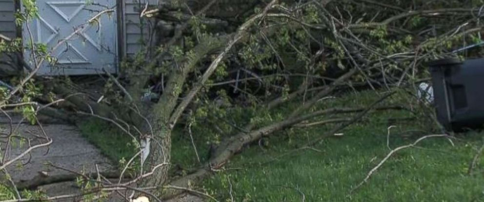 Severe weather in Wisconsin uprooted trees.