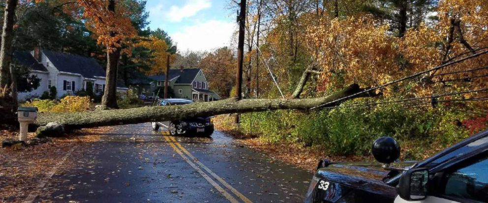 PHOTO: A tree fell on a car and brought down a power line in Wilmington, MA.