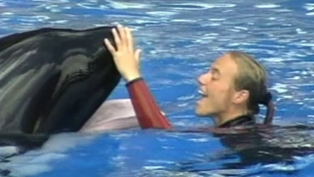 VIDEO: Dawn Brancheau was killed at the Florida park during show with a killer whale.