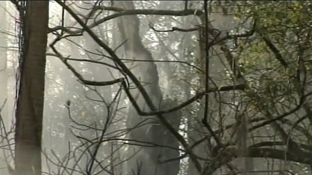 VIDEO: One of the worlds oldest cypress trees has caught fire in central Florida.