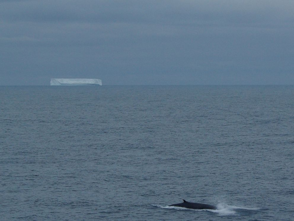 PHOTO: A fin whale surfaces at 58°S in the southern Indian Ocean in a photo captured in January 2010 from the R/V Marion Dufresne, the research vessel that collected hydrophone data for the new study.