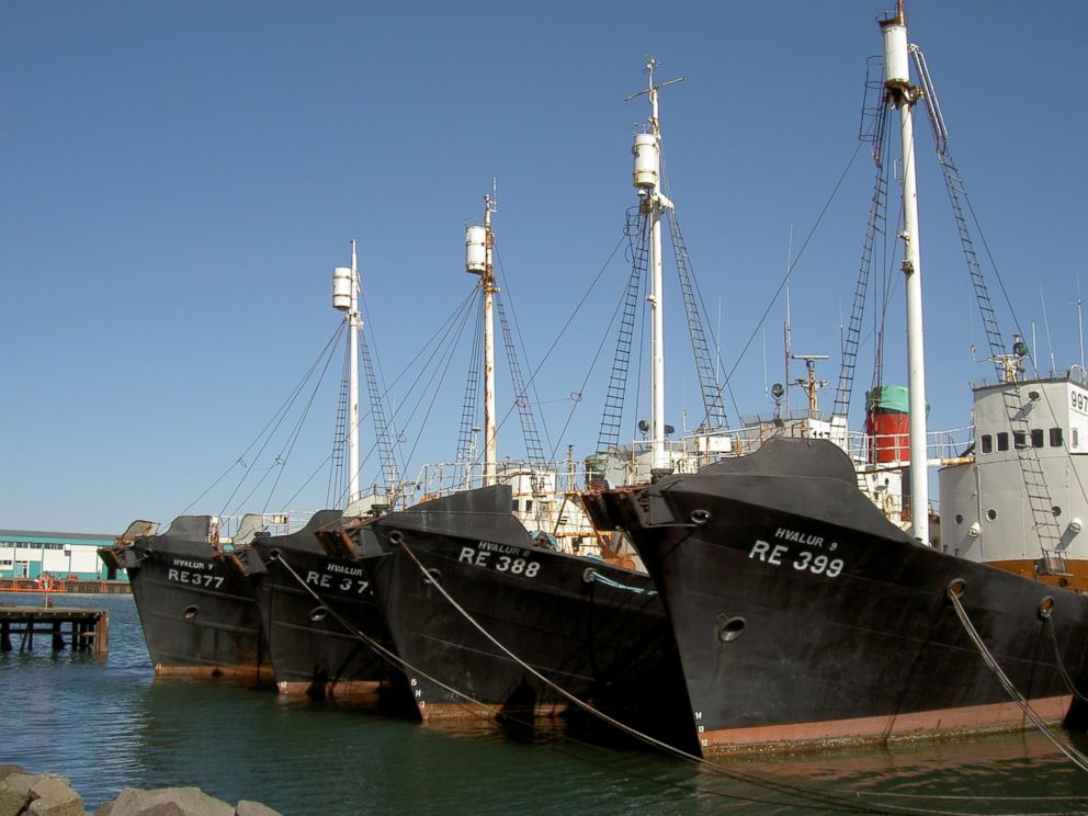 PHOTO: Retired Hvalur whaling vessels sit rusting in Reykjavik Harbour in May 2003.