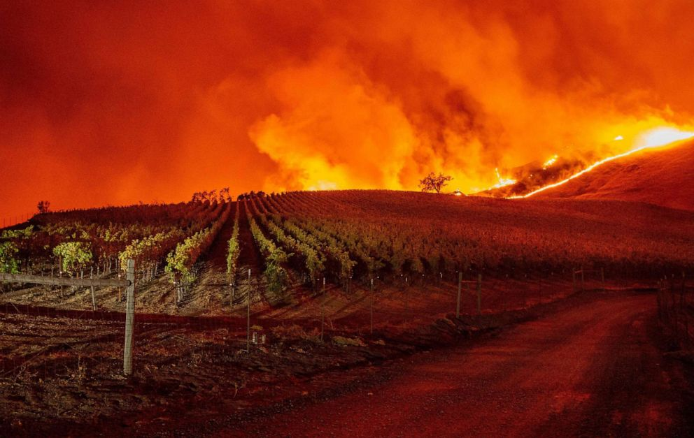 PHOTO: Flames approach rolling hills of grape vines during the Kincade fire near Geyserville, Calif., Oct. 24, 2019.
