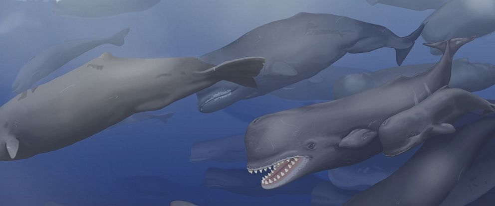 PHOTO: In this reconstruction, a pod of Albicetus travel together through the Miocene Pacific Ocean, surfacing occasionally to breathe.